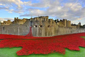 Poppies. Tower. London. Sea-of-Red