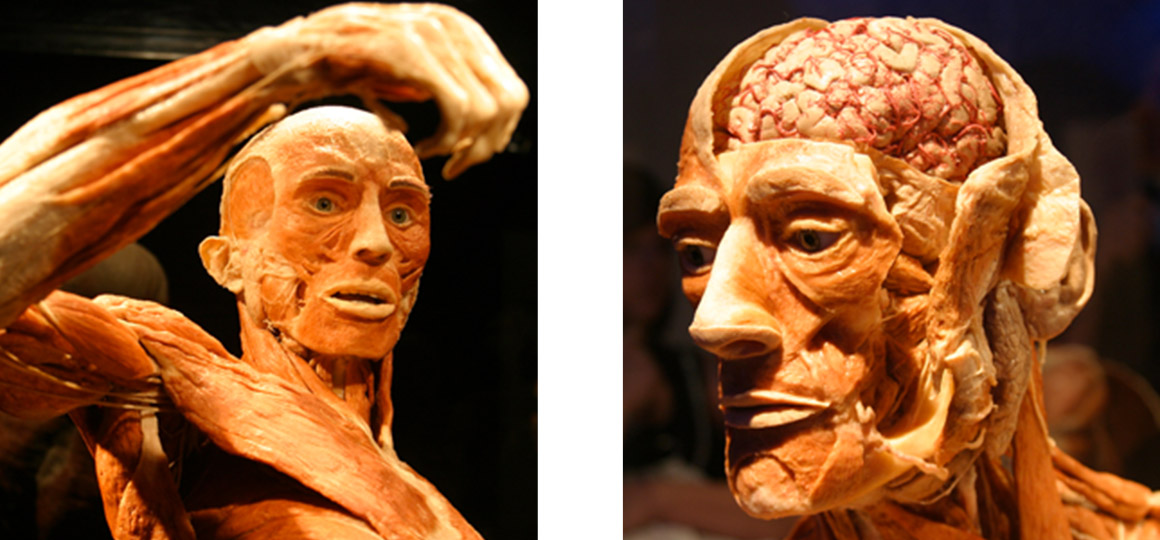 body worlds exhibition, plasticination technique